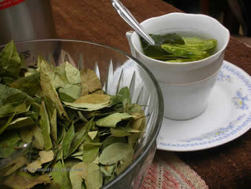 Coca Tea Altitude Sickness
